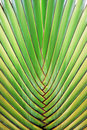 Big palm tree leaf Stock Images