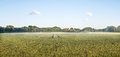 Big Panorama of a grainfield in the morning sun with fog. Bayreuth, Germany. Royalty Free Stock Photo
