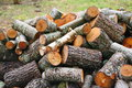 Big pile of firewood. Big pile of firewood for fireplace. sawn tree trunks red aspen and birch, piled in a heap Royalty Free Stock Photo
