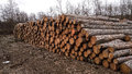 Big pile of wood pine Stock Photos