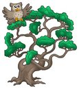 Big pine tree with cartoon owl Stock Images