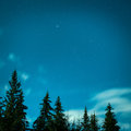Big pine trees under blue night sky Royalty Free Stock Photo