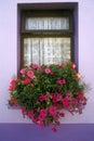 Big pink flowers in cottage windowsill , Eyeries Village, West Cork, Ireland Royalty Free Stock Photo