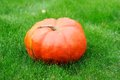 Big pumpkin in the green grass Stock Image