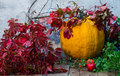 Big pumpkin, green twigs and wild grapes with red leaves in the
