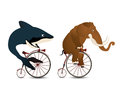 The big race cartoon style drawing of a mammoth and a whale racing on bicycles Royalty Free Stock Photography