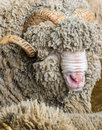 Big ram portrait close up Royalty Free Stock Photos