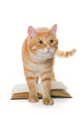 Big red cat and book Royalty Free Stock Photo