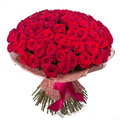 Big red roses bunch isolated on white background Royalty Free Stock Photo