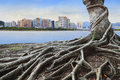 Big root tree infront of city building concept forest and urban grow up together Royalty Free Stock Photo