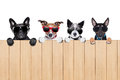 Big row of dogs Royalty Free Stock Photo