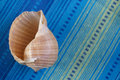 Big seashell Royalty Free Stock Photo
