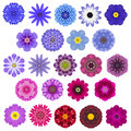 Big selection of various concentric mandala flowers isolated on white colorful kaleidoscopic collection in shape Stock Image