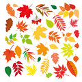 Big set of beautiful colorful autumn leaves.  design elements on white background. Vector illustration. Royalty Free Stock Photo