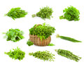 Big set of bunches and basket of fresh spice herbs isolated basil chive majoram oregano parsley thyme rucola rosemary on white Royalty Free Stock Photos