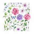 Big set of Flowers roses, hydrangea, apple tree flowers , leaves, petals and butterflies isolated on white background.