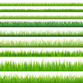 Big Set Grasses. Vector Royalty Free Stock Images