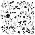 Big set silhouettes botanic blossom floral elements Royalty Free Stock Photo