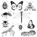 Big set of vector insects graphic Royalty Free Stock Photo