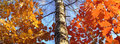 Big size autumn panorama Stock Photo