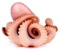 Big Smoked Octopus Royalty Free Stock Photo