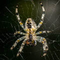 Big spider in its web Stock Photography