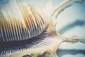 Big Spiked Seashell Royalty Free Stock Photo