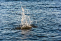 Big splash water of from the thrown stone uneven on the surface of the Royalty Free Stock Photo