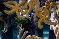 Big starfish floating in tank at the aquarium Stock Photo