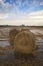 Big straw bales at paddy field,Malaysia.
