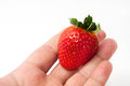 Big strawberry in the hand Royalty Free Stock Photo
