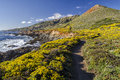 Big Sur Trail Royalty Free Stock Image