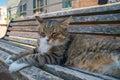 Big tabby cat sitting on sunny bench in Santarcangelo Italy Europe Royalty Free Stock Photo