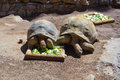 Big tortoise, turtles in animal park in Gran Canaria, Spain