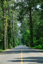 Big tree beside asphalt road Royalty Free Stock Image