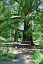 Big tree and bench Royalty Free Stock Photo