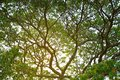 Big tree branch and green leaf. Tropical big tree branch and gre Royalty Free Stock Photo