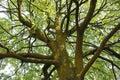Picture : Big Tree   novices