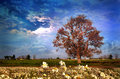 Big tree in flower field with dramatic sky Royalty Free Stock Photo