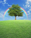 Big tree with green grass field over rainbow and blue sky, nature background Royalty Free Stock Photo