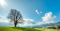 Big tree on green hill, blue sky, clouds and mountains Royalty Free Stock Photo