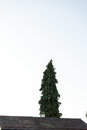 Big tree with house roof and dark sky melancholic lonely view Royalty Free Stock Photo
