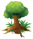 A big tree illustration of on white background Stock Photos