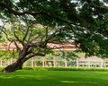 Big tree on the lawn in the garden home background Stock Photos