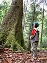 Big tree and little boy Royalty Free Stock Photos