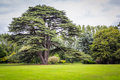 Big tree outdoor shot of a in a field in ireland Stock Photography