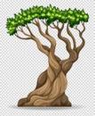 Big tree on transparent background