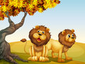A big tree with two lions Royalty Free Stock Photo