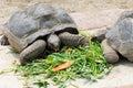 Big turtle Stock Photo