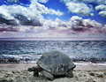 Big Turtle On The  Ocean Beach Royalty Free Stock Photo